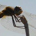 Anti-bacterial surfaces inspired by cicada and dragonfly wings
