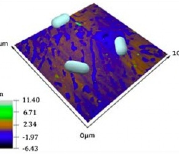 Bacterial attachment on sub-nanometrically smooth titanium substrata