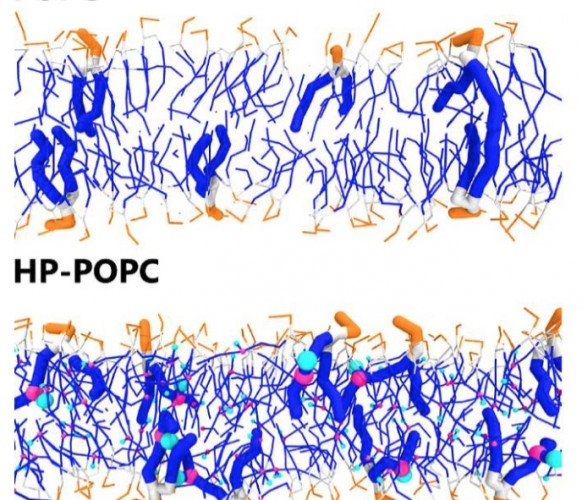 Peroxidised phospholipid bilayers: insight from Coarse-Grained Molecular Dynamics simulations
