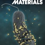 Antibacterial Action of Nanoparticles by Lethal Stretching of Bacterial Cell Membranes